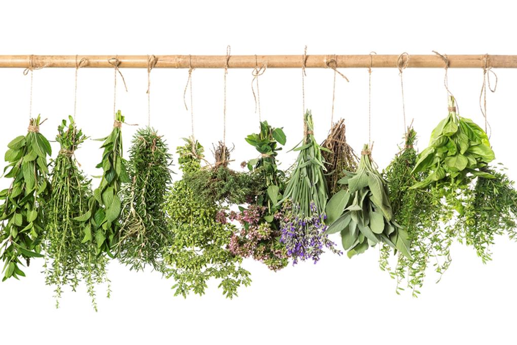 variedad de hierbas