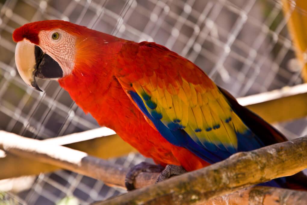 En el restaurante podrás observar guacamayas y otras aves